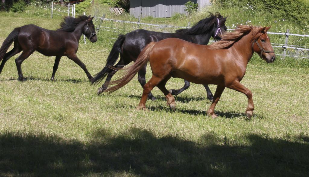 Hester i trav
