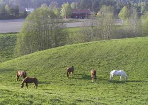 Om sommeren går hestene fritt på naturbeite. Her finner de et rikt mangfold av urter, gras og busker.